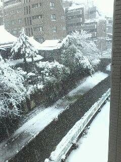 初稽古、初雪